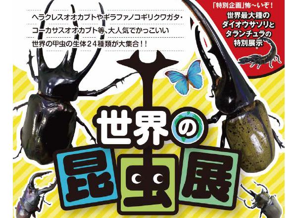 【イベント終了のご報告】「世界の昆虫展」